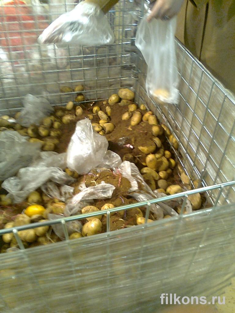 Земля вместо картошки